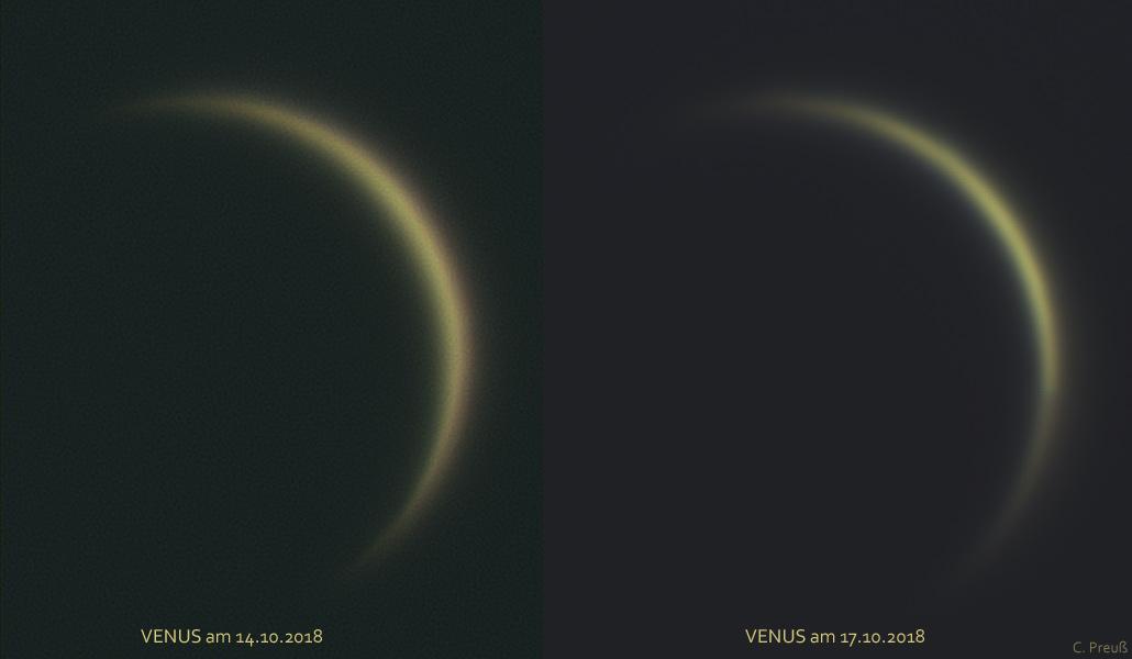 Venussicheln